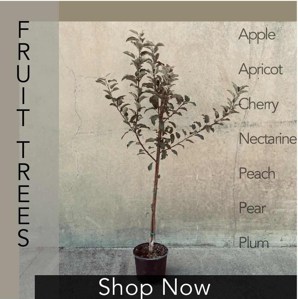 Fruit Trees Image