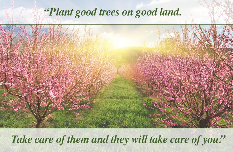 Sunrise Image – Plant good trees on good land. Take care of them and they will take care of you.
