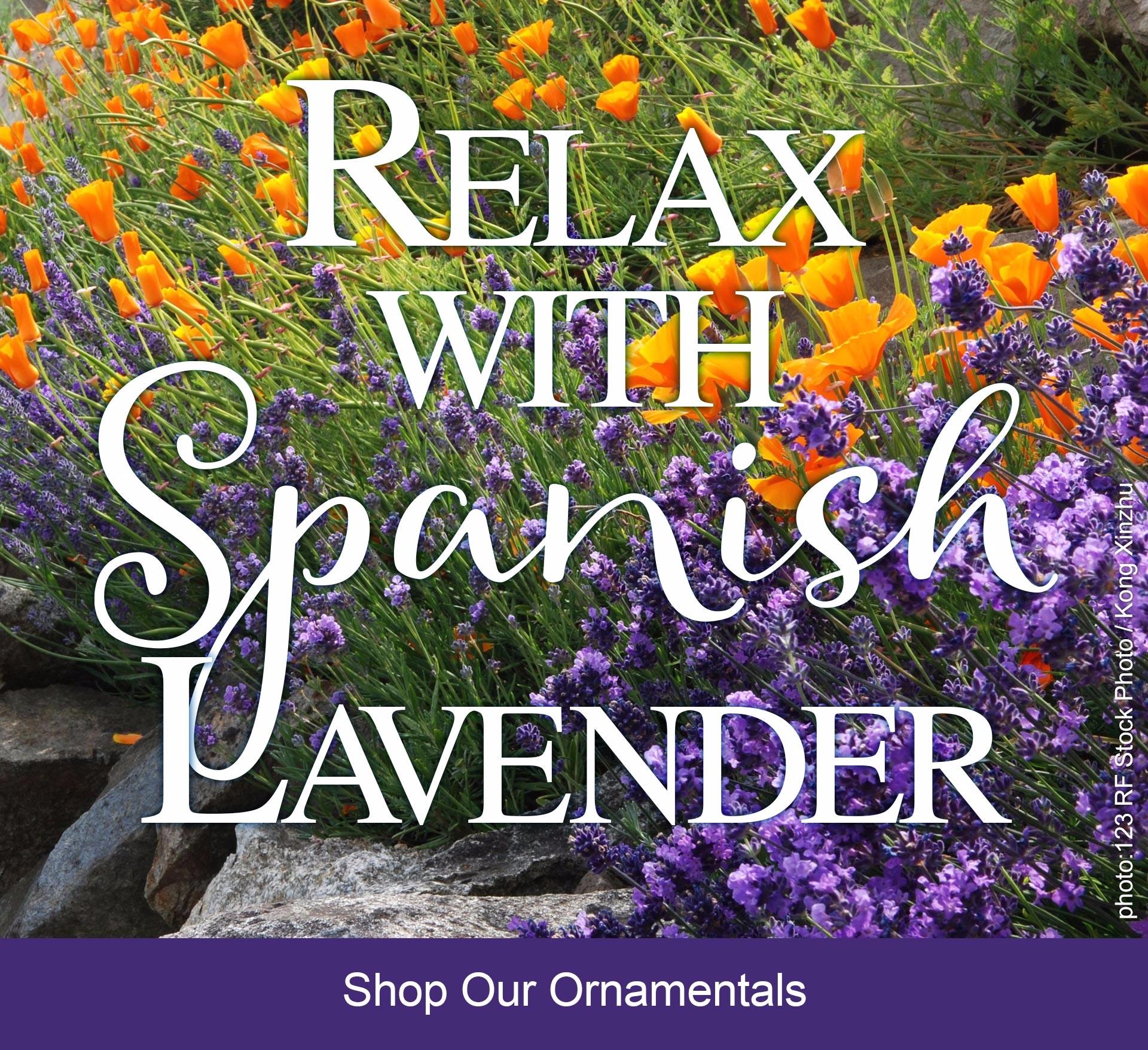 lavender_slide