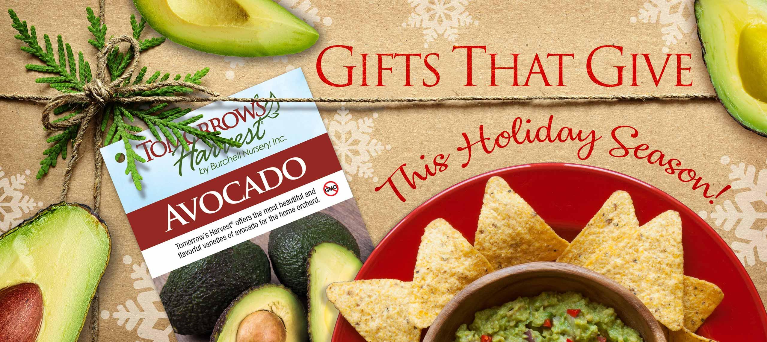 Holiday Avocado Website Cover