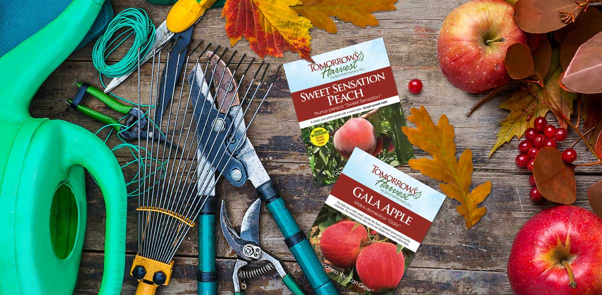Gardening tools, Tomorrow's Harvest Peach Labels, Apples and Brown leaves