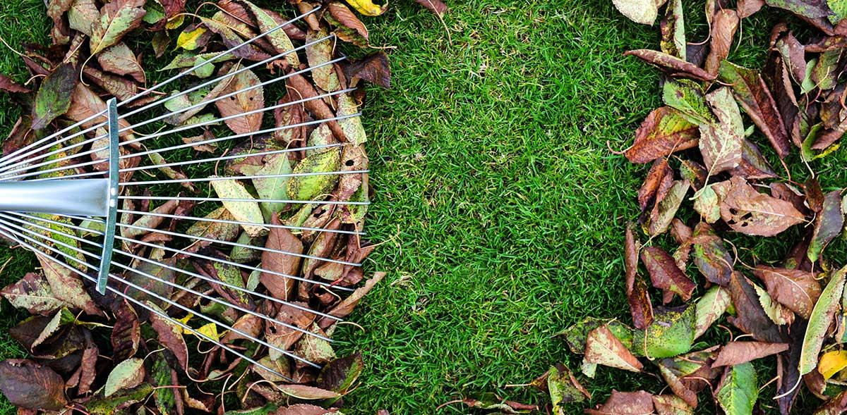 Overhead of raking leaves.