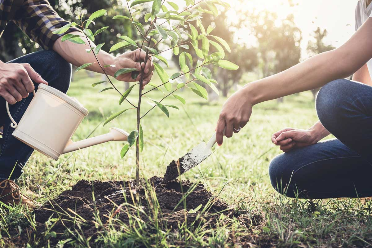 Two Adults Planting and Watering a Sapling
