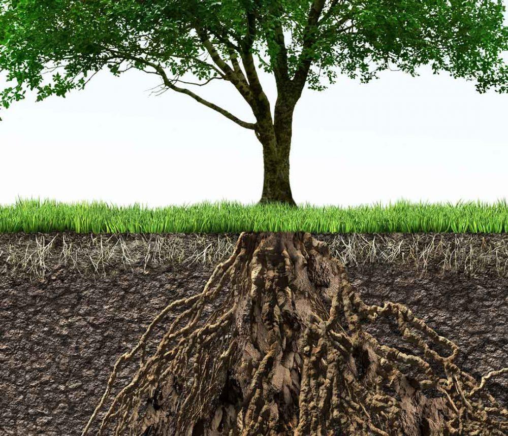 Tree root diagram.