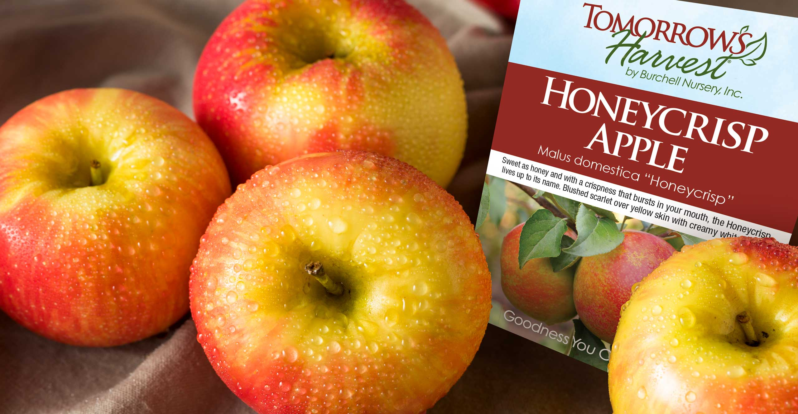 Honeycrisp Apples with Tomorrows Harvest by Burchell Nursery Retail Tag
